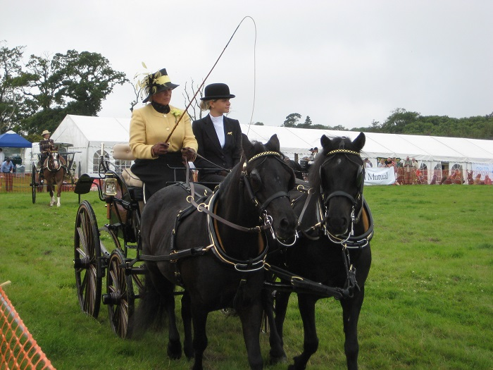 Elegant Carriage driving at Woolsery Show North Devon