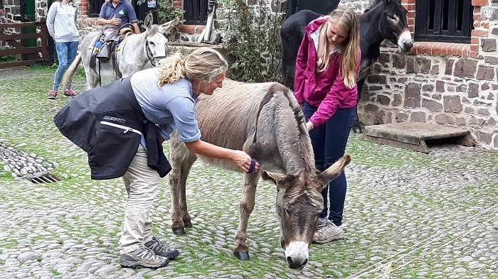 Clovelly donkey grooming North Devon