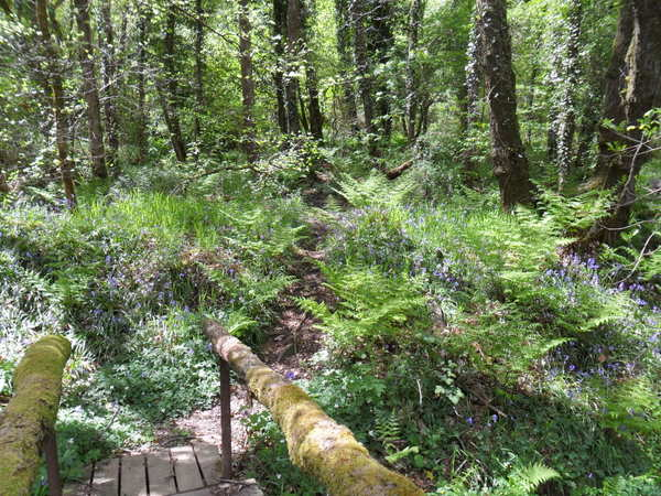 Woods at Robin Hill Farm Cottages North Devon